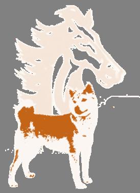 hund pferd
